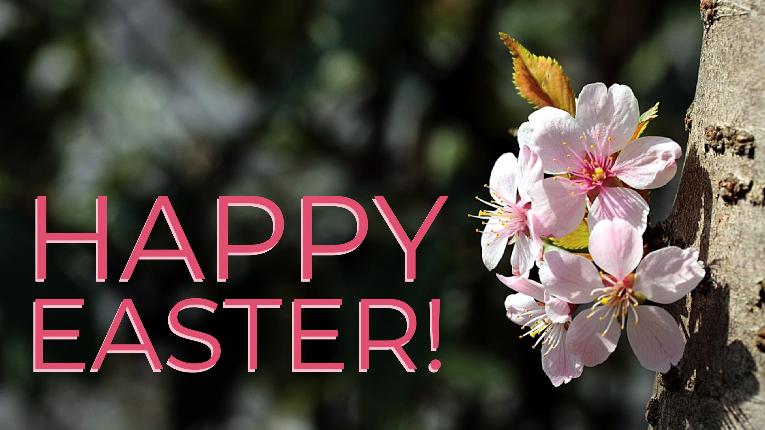 Bishop John shares an Easter Message
